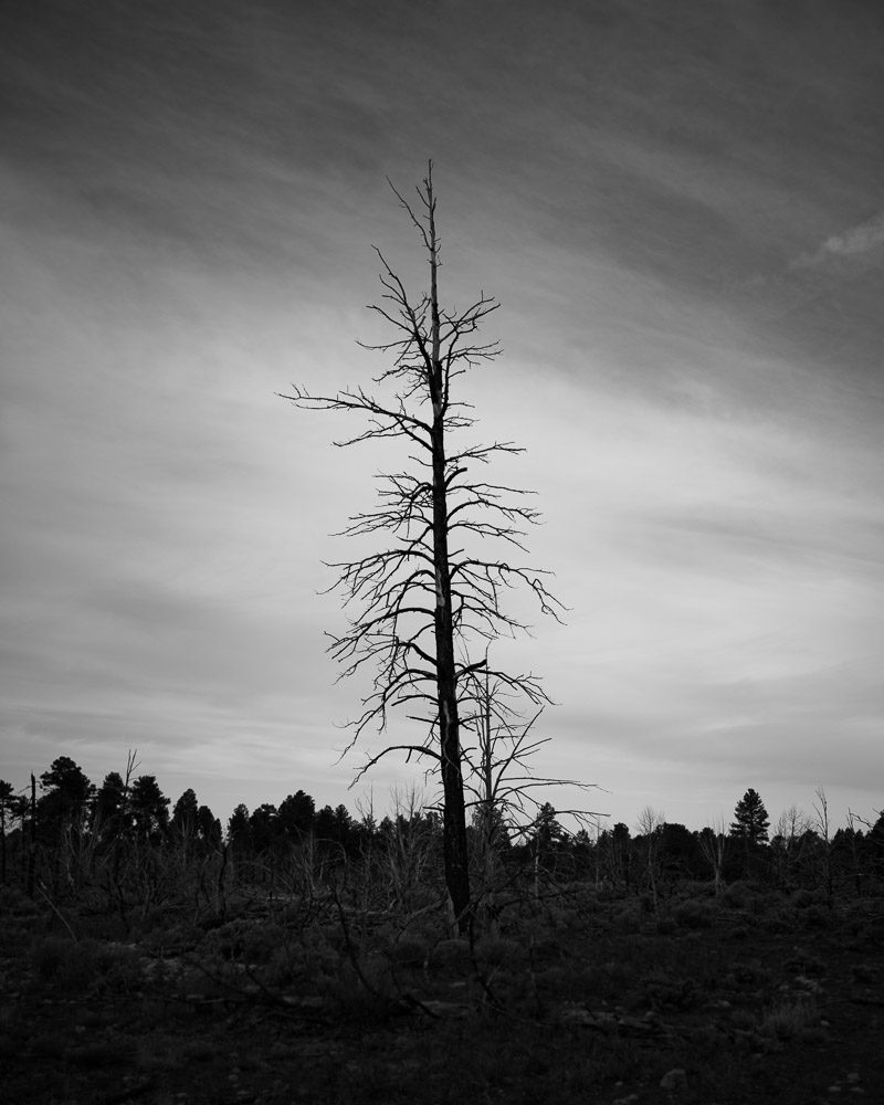 burned-forest-1-800x1000 Western USA | Fine Art Travel Photography