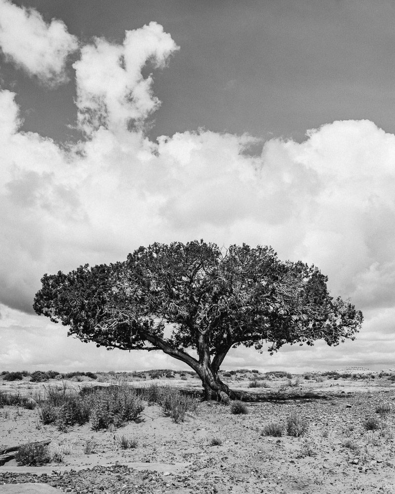 lonely-tree-1-800x1000 Western USA | Fine Art Travel Photography