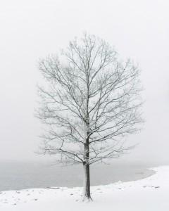 snowww-1-3-copy-240x300 snowww-1-3 copy