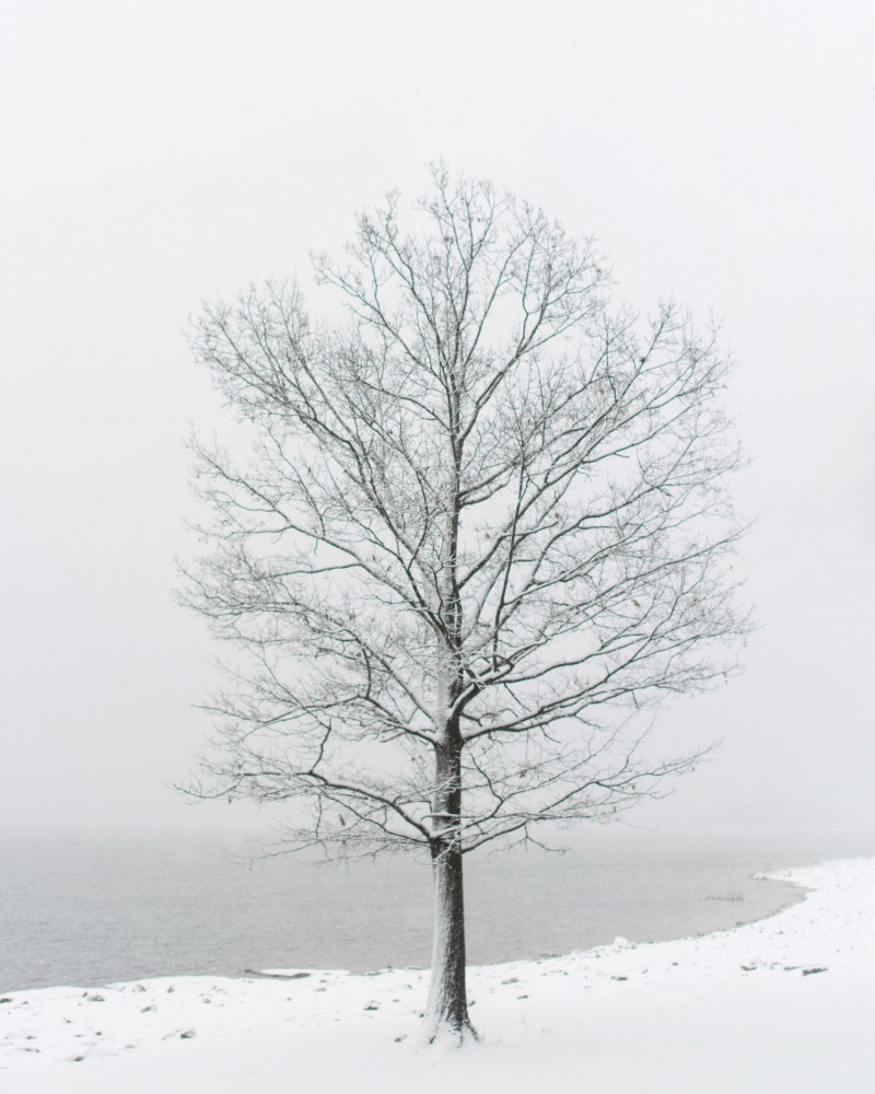 snowww-1-3-copy-800x1000 Tennessee | Fine Art Travel Photography