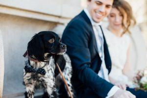 DOG-BOWTIE-WEDDING-300x200 DOG-BOWTIE-WEDDING
