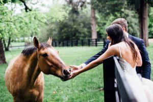 bride-groom-petting-horse-300x200 bride-groom-petting-horse