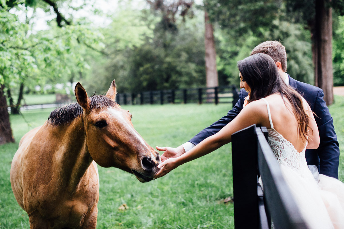 bride-groom-petting-horse Belle Meade Plantation Wedding | Kendall and Andrew